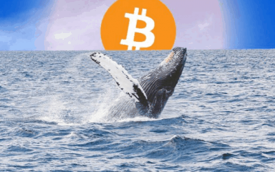 Bitcoin Whales are making a plunge into the market